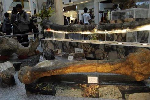 Museum Purbakala Sangiran, Tempat Belajar Evolusi Manusia