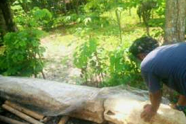 Menhir yang ditemukan di komplek pemakaman umum dusun Sokoliman II, Bejiharjo, Karangmojo, Gunungkidul pada akhir September 2016 lalu diperkirakan berasal dari 2.000 tahun Sebelum Masehi (SM)