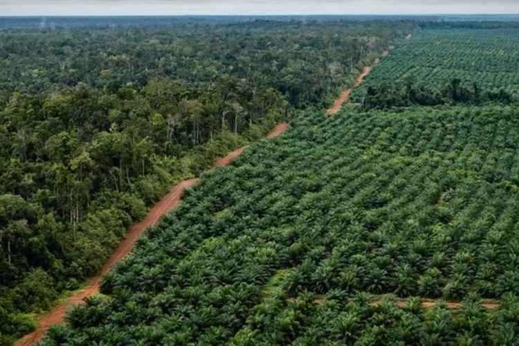 Korindo beralasan perkebunan sawitnya berada dekat dengan perbatasan Papua dan Papua Nugini sehingga keberadaan aparat polisi diperlukan untuk menjaga keamanan. Foto diambil tahun 2018.