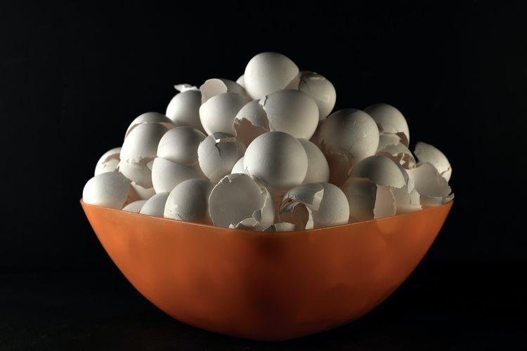 Ilustrasi cangkang telur