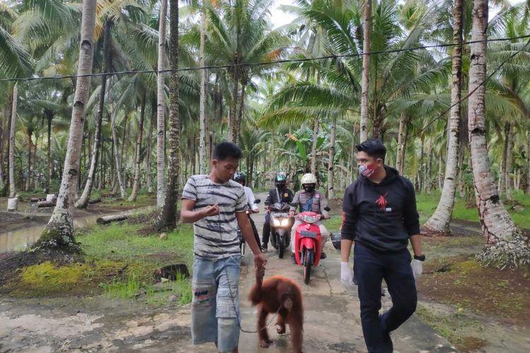 Satu individu orangutan betina, berusia lima tahun yang dipelihara warga di Kelurahan Tanjung, Kecamatan Mempawah Hilir, Kabupaten Mempawah, Kalimantan Barat, kini telah diamankan.