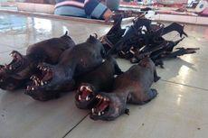Imbas Wabah Corona, Harga Daging Kelelawar di Tomohon Anjlok