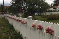 Viral Kabar Apel Digantung Gratis di Pagar Rumah Norwegia, Bagaimana Faktanya?