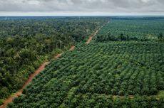 Daftar 5 Perusahaan Penguasa Perkebunan Kelapa Sawit di Kalsel