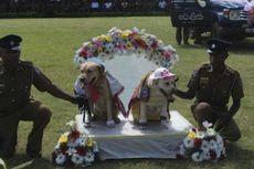 Rayakan Perkawinan Anjing, Polisi Minta Maaf