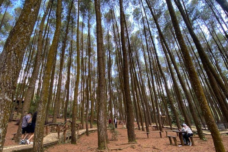 Kawasan Pinus Sari, Mangunan, Dlingo, Bantul