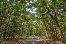 Wisata ke Taman Nasional Alas Purwo, Bisa ke Mana Saja?