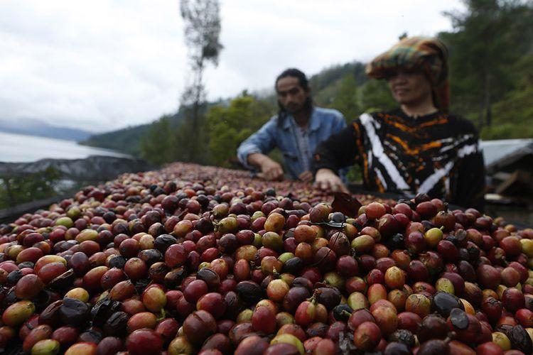Foto dirilis Selasa (16/3/2021), memperlihatkan petani menjemur biji kopi arabika Gayo di pinggiran Danau Laut Tawar, Takengon, Aceh Tengah, Aceh. Pandemi Covid-19 yang juga telah merambah dataran tinggi Gayo di Aceh tidak menyurutkan semangat para petani kopi arabika di daerah itu untuk terus meningkatkan produksi yang permintaannya kembali meningkat di pasar internasional.