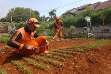 PPSU Lebak Bulus Sulap Lahan Kosong Jadi Tempat Bertani