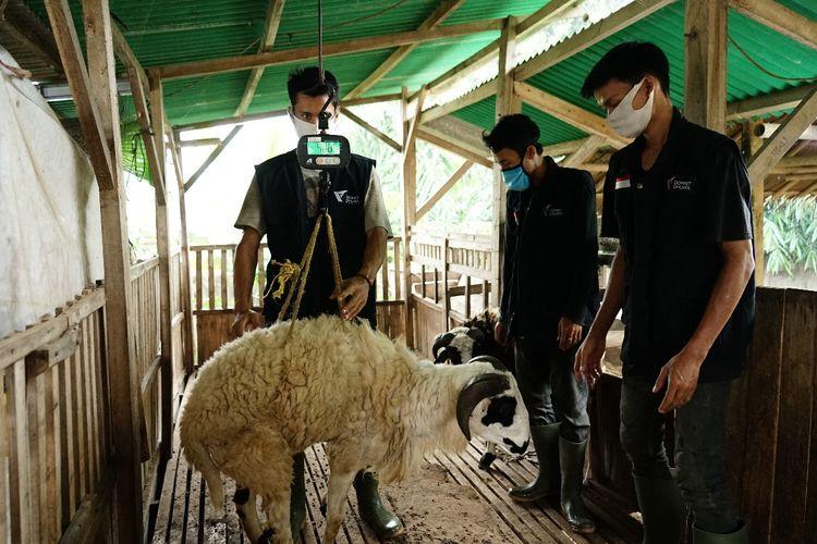 Para peternak mitra Tebar Hewan Kurban Dompet Dhuafa memastikan kondisi kesehatan hewan ternak siap dikubarkan di Idul Adha.