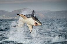 7 Ikan Paling Berbahaya di Dunia