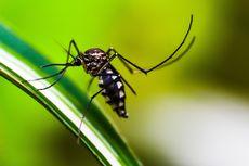 9 Tanaman Pengusir Nyamuk, Mudah Ditanam di Rumah