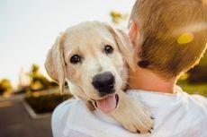 10 Tanda Anjing Mencintai Pemiliknya, Apa Saja?
