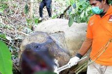 DPR Aceh Sepakati Hukum Cambuk 100 Kali untuk Pemburu Satwa Liar
