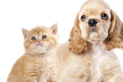 Bagaimana Cara Membuat Kucing dan Anjing Berteman?