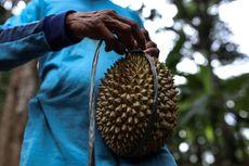 Kenapa Indonesia Punya Jenis Durian Terbanyak di Dunia?