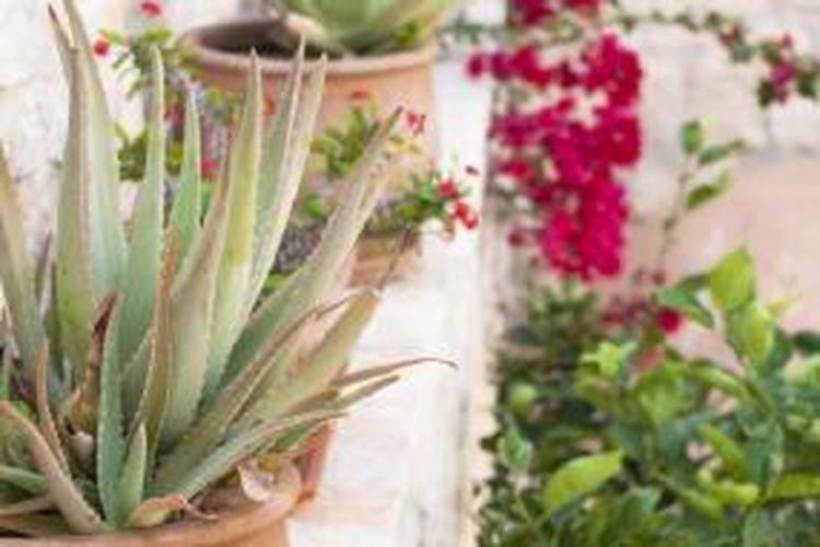 Latar dengan warna-warna netral merupakan salah satu daya tarik taman bergaya Yunani