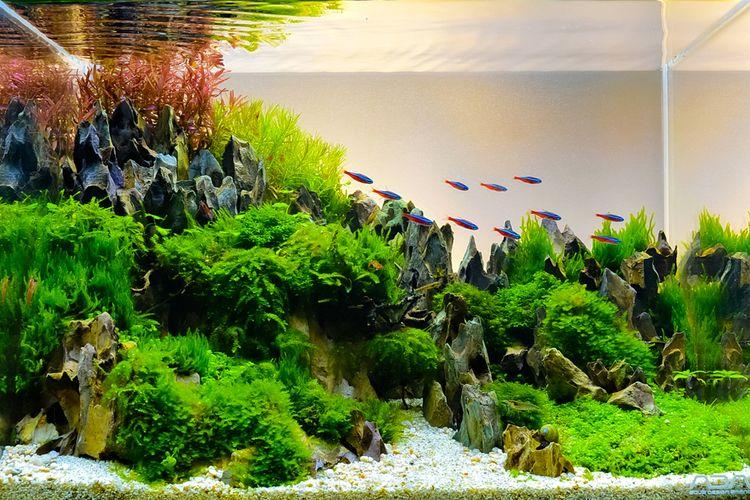 Ilustrasi aquascape dengan menambahkan ikan.