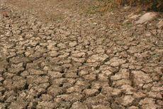 Kekeringan di Samosir Capai 2.007 Hektar, Kementan Turun Tangan