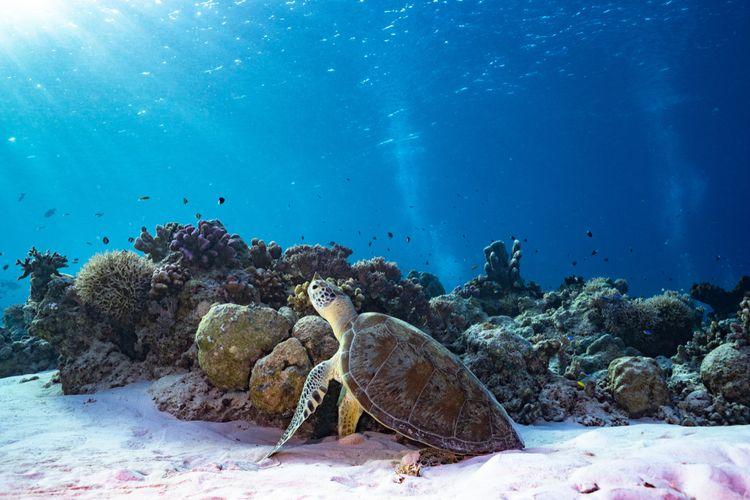 Panorama bawah laut Taman Nasional Tubbataha, Filipina.