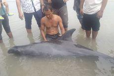 Detik-detik Nelayan Selamatkan Paus 2 Meter di Pantai Aceh Timur