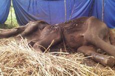 Pasca-kematian Gajah Yani, Pengunjung Kebun Binatang Disarankan Pakai Masker