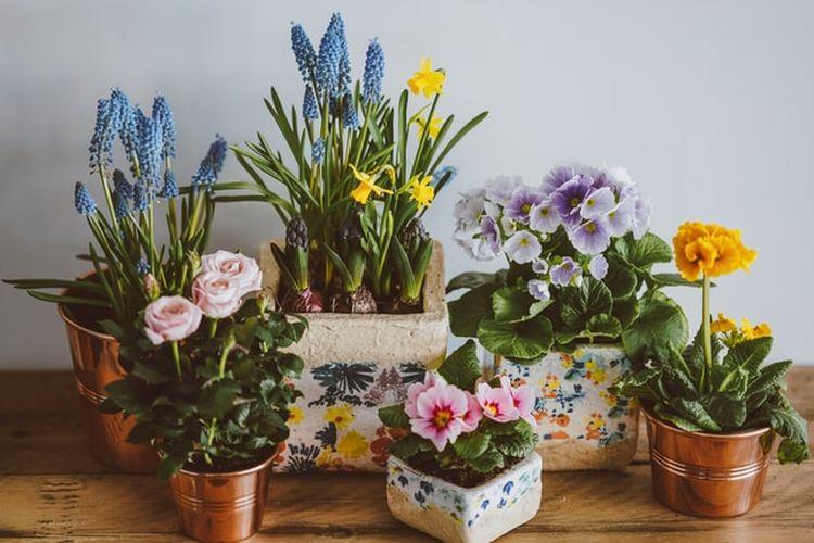 Ilustrasi tanaman hias dalam pot
