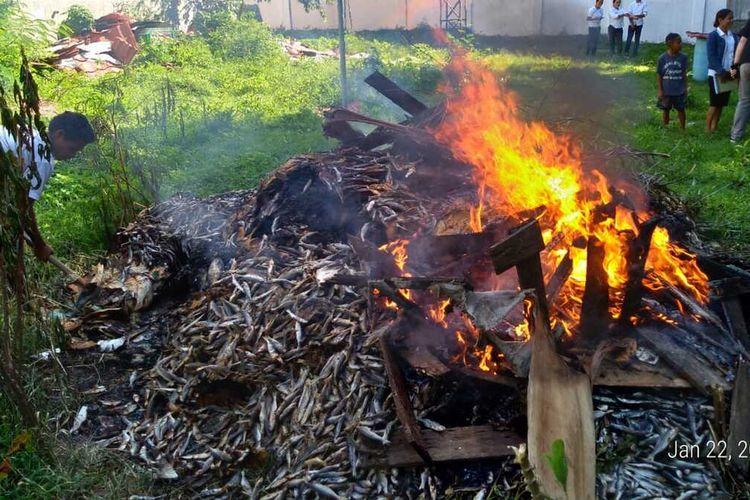 Foto : 1,9 ton ikan yang mengandung formalin dimusnahkan Dinas Ketahanan Pangan dan Perikanan (DKPP), Kabupaten Manggarai Barat, NTT, Selasa (4/2/2020).