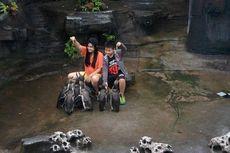 Kunjungan Seru ke Taman Safari Indonesia Paling Luas