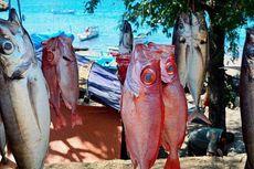 BPS: Harga Ikan Segar Turun akibat Penanganan