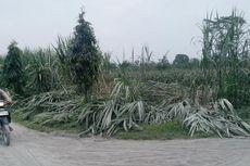 Abu Vulkanik Kelud Merusak 7.832 Hektare Lahan Pertanian di Kediri