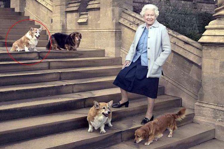 RatuElizabeth bersama empat anjing kesayangannya. Salah satunya adalah Willow (yang dilingkari)