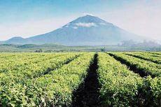 Gunung Kerinci Erupsi, Penerbangan Garuda Indonesia Tak Terdampak