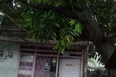 Dua Pohon Tumbang di Jakarta Barat akibat Hujan Deras, Salah Satunya Timpa Rumah