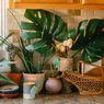 Tiga Tanaman yang Bisa Mempercantik Dapur Rumah