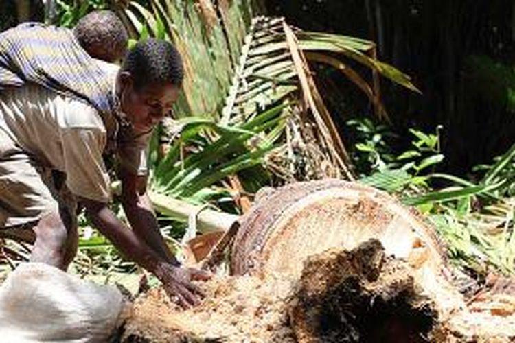 Sambil menggendong Lobeka, anaknya, Agustina mengumpulkan sagu yang telah dipangkurnya di hutan di pinggir Sungai Welderman, Distrik Kaibar, Kabupaten Mappi, Papua.