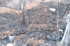 Polisi Cari Pembakar Sampah yang Sebabkan Kebakaran di Pinggir Jalan Daan Mogot
