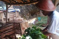 Satu Keluarga Isolasi Mandiri, Warga Bantu Cari Pakan Ternak
