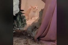 Video Viral Kucing BAB Saat Majikannya Lamaran lalu Kabur dan Hilang