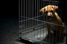 Bangkai Anak Anjing Dikafani dan Dibungkus Kardus Hebohkan Warga