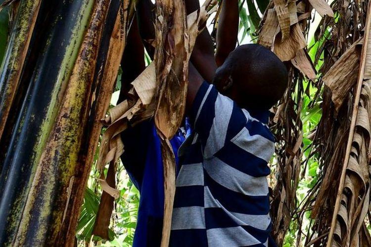 Di Uganda berkembang kepercayaan orang tua bisa cepat kaya jika menyerahkan anak-anak untuk dimakan arwah (foto ilustrasi).