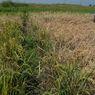 IPB-Kemnaker Tingkatkan Kualitas Petani lewat Tenaga Ahli