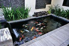 9 Alasan Mengapa Perlu Memiliki Kolam Ikan di Rumah