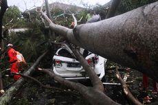 Cianjur Dilanda Hujan Badai, Mobil PNS Ringsek Tertimpa Pohon Sengon