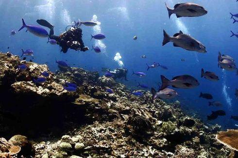 Jepang Jadi Sasaran Promosi Wisata Selam Indonesia