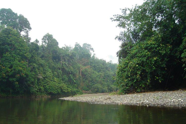 Tampak hutan yang dikelola masyarakat Adat Guguk begitu terpelihara dari kerusakan dan penebangan ilegal