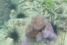 Keindahan Bawah Laut Karimata Terancam Bom Ikan