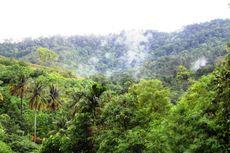 Dampak Ekosistem Jika Pohon Besar Ditebang dan Terbakar, Jawaban Soal TVRI 8 Mei 2020
