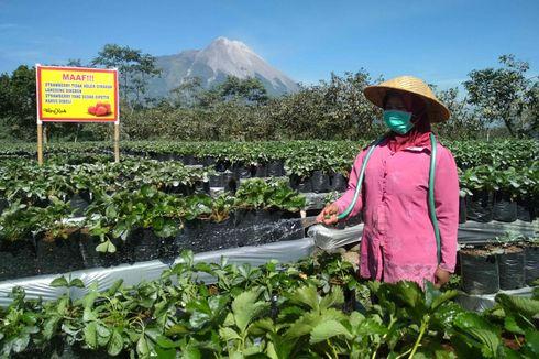Abu Vulkanik Merapi Capai Laut Selatan Jawa, Nelayan Diimbau Pakai Masker