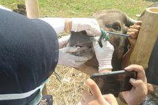 Pemotongan Hewan Kurban Saat Pandemi, Daging Diantar ke Rumah